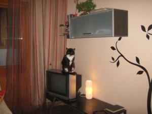 навесной настенный шкаф в гостиной